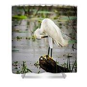 Snowy Egret In Swamp Shower Curtain