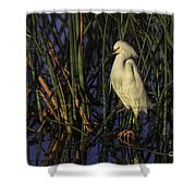 Snowy Egret In The Reeds Shower Curtain