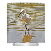 Snowy Egret Looking For Fish Shower Curtain