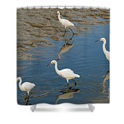 Snowy Egret Lunch Break Shower Curtain
