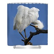 Snowy Egret Photograph Shower Curtain