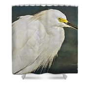 Snowy Egret Portrait Shower Curtain