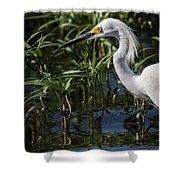 Snowy Egret Stalking Shower Curtain