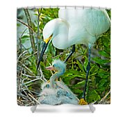 Snowy Egret Tending Young Shower Curtain