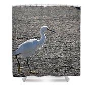 Snowy Egret Walk Shower Curtain