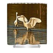 Snowy Egret Wingspan Shower Curtain