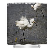 Snowy Egret With Fish No.2 Shower Curtain