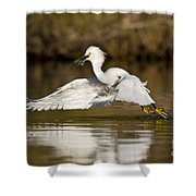 Snowy Egret With Lunch Shower Curtain