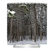 Snowy Forest In Acadia Shower Curtain