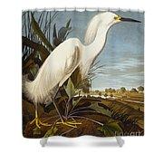 Snowy Heron Or White Egret Shower Curtain