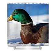 Snowy Mallard Shower Curtain