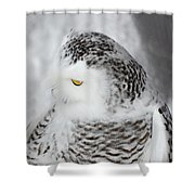 Snowy Owl 2 Shower Curtain