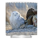 Snowy Owl Among The Rocks Shower Curtain