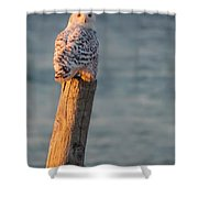 Snowy Owl At The Seashore Shower Curtain