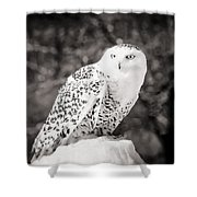 Snowy Owl Cold Stare Black And White Shower Curtain