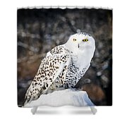Snowy Owl Cold Stare Shower Curtain