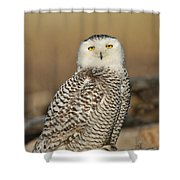 Snowy Owl Female Shower Curtain