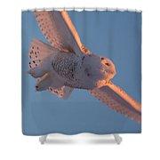 Snowy Owl Flight Shower Curtain