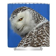 Snowy Owl Greeting Card Shower Curtain by Everet Regal