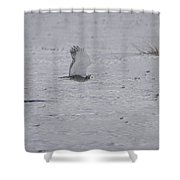 Snowy Owl In Flight 2 Shower Curtain