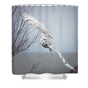 Snowy Owl In Flight Shower Curtain by Carrie Ann Grippo-Pike