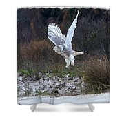 Snowy Owl In Florida 10 Shower Curtain