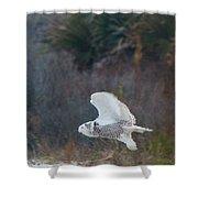 Snowy Owl In Florida 11 Shower Curtain