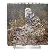 Snowy Owl In Florida 14 Shower Curtain