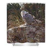 Snowy Owl In Florida 15 Shower Curtain