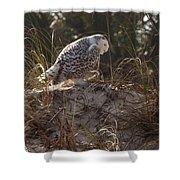 Snowy Owl In Florida 16 Shower Curtain