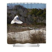 Snowy Owl In Florida 18 Shower Curtain