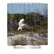Snowy Owl In Florida 19 Shower Curtain