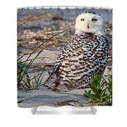 Snowy Owl In Florida 24 Shower Curtain