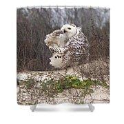 Snowy Owl In Florida 4 Shower Curtain