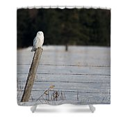 Snowy Owl Landscape Shower Curtain