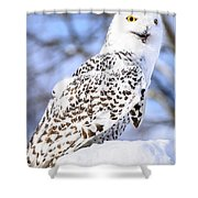 Snowy Owl Look Out Shower Curtain