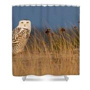 Snowy Owl Morning Shower Curtain
