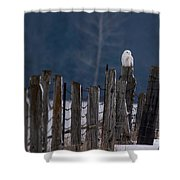 Snowy Owl On A Fence Shower Curtain