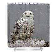Snowy Owl On An Ice Flow Shower Curtain