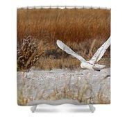 Snowy Owl On The Hunt Shower Curtain