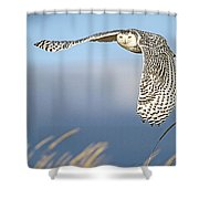 Snowy Owl Over The Dunes Shower Curtain
