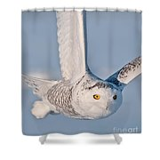Snowy Owl Pictures 47 Shower Curtain