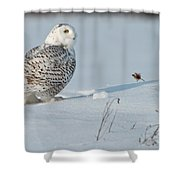 Snowy Owl Pictures 53 Shower Curtain