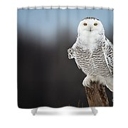 Snowy Owl Pictures 69 Shower Curtain