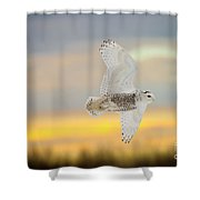 Snowy Owl Pictures 71 Shower Curtain