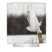 Snowy Owl Pictures 80 Shower Curtain