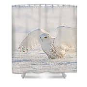 Snowy Owl- Ready For Takeoff Shower Curtain