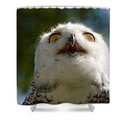 Snowy Owl With Big Eyes Shower Curtain