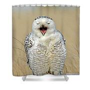 Snowy Owl Yawning Shower Curtain