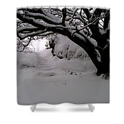 Snowy Path Shower Curtain by Amanda Moore